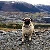 Miffy på fjelltur