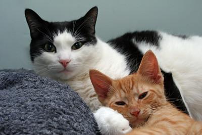 Pair of cute cats