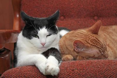 Tired Kitties