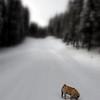 Liten hund i vinterlandskap..