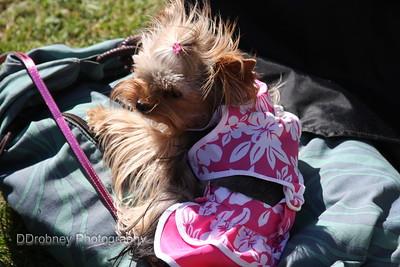Meet Twiggy!  Isn't she the cutest little thing?  ;-)