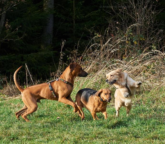 Hunde am Hasenweg