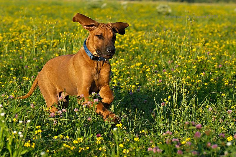 Bon Ami on the meadow