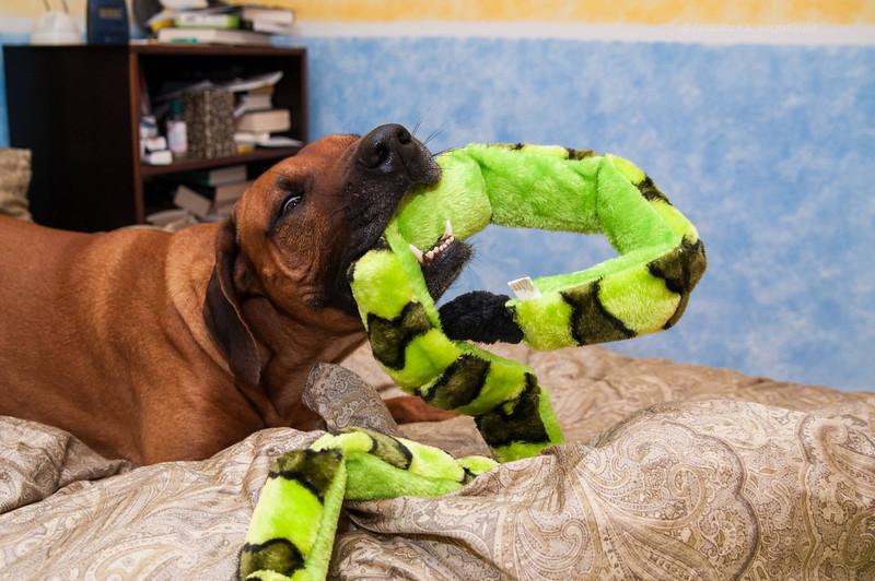 Bonni unwraps his Xmas present from Kate