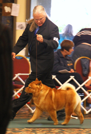 Paul at 2011 National Sired by our smooth Derek #1 chow in 2011