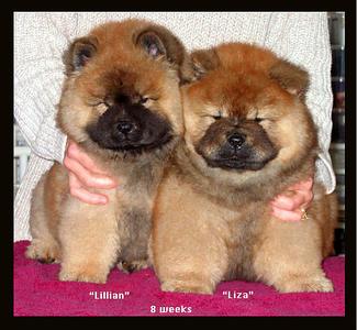Lillian and Liza  Meg x Gator