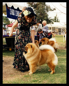 Vincent at 10 months old at the Visalia Chow National