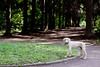 Standing hound