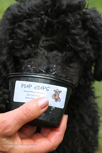 Here's Iggy...enjoying another of those yummy Pup Cups!  Iggy graced the headline of the CFM newsletter with all the Dog Day information.  ;-)