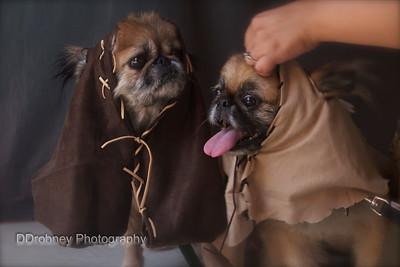 Mogu and Kuma - getting into their Ewok costumes.  ;)