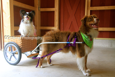 Emmett, with his new wagon, and his buddy Ortiz along for the ride!  So darn cute - I love these guys!  :)
