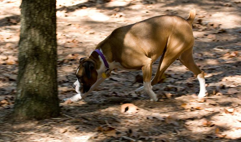 Dog Park-1