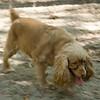 Dog Park-5