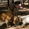 Dog Park-13