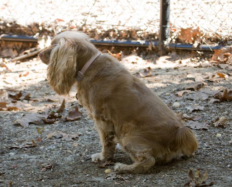 Dog Park-4
