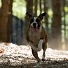 Dog Park-24
