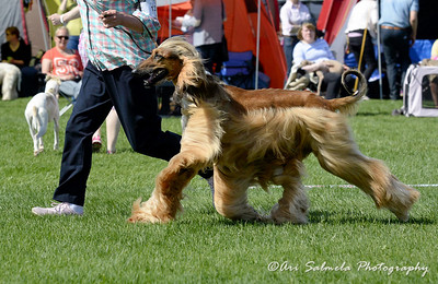 royal_canin_show_21432