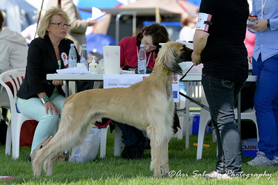 royal_canin_show_21380