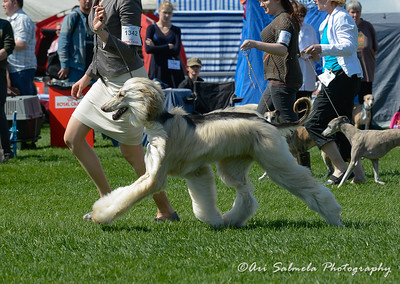royal_canin_show_21509