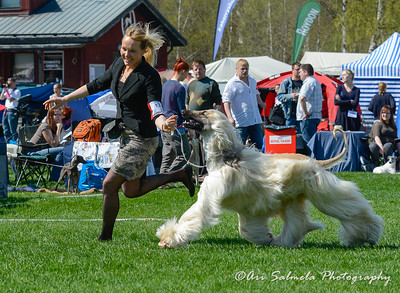 royal_canin_show_21460