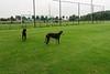 Fabio en Murphy voetbalveld