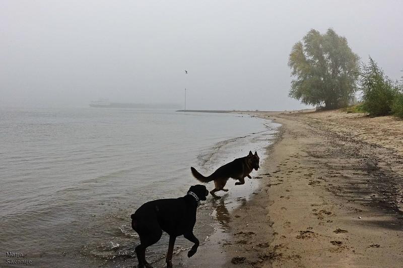 Doggies having fun