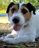 Watson at dog's eye level