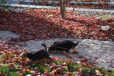 11.24.2007 Puppies