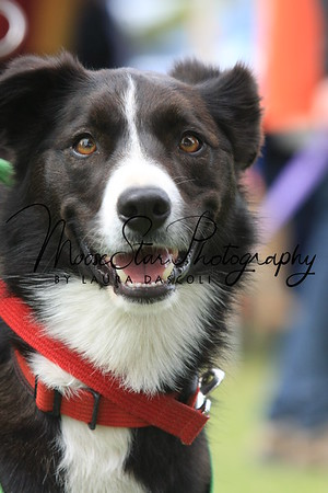 Flyball Nationals 2013 (Sat PM)