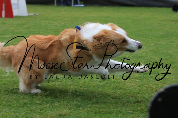 Flyball Nationals 2013 (Sat AM)