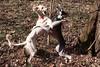 Dogs dance
