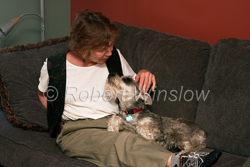 Model Released, Property Released, Woman with her Miniature Schnauzer, Pure Bred, Male, 3 Years Old