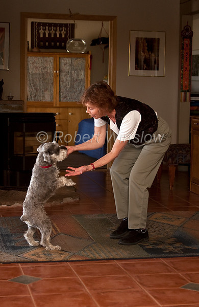 Model Released, Property Released, Miniature Schnauzer, Male, pure bred, 3 years old, miniature schnauzer, dancing with female owner