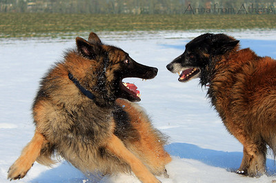 Rev and Uhlan playing in the snow February 2013