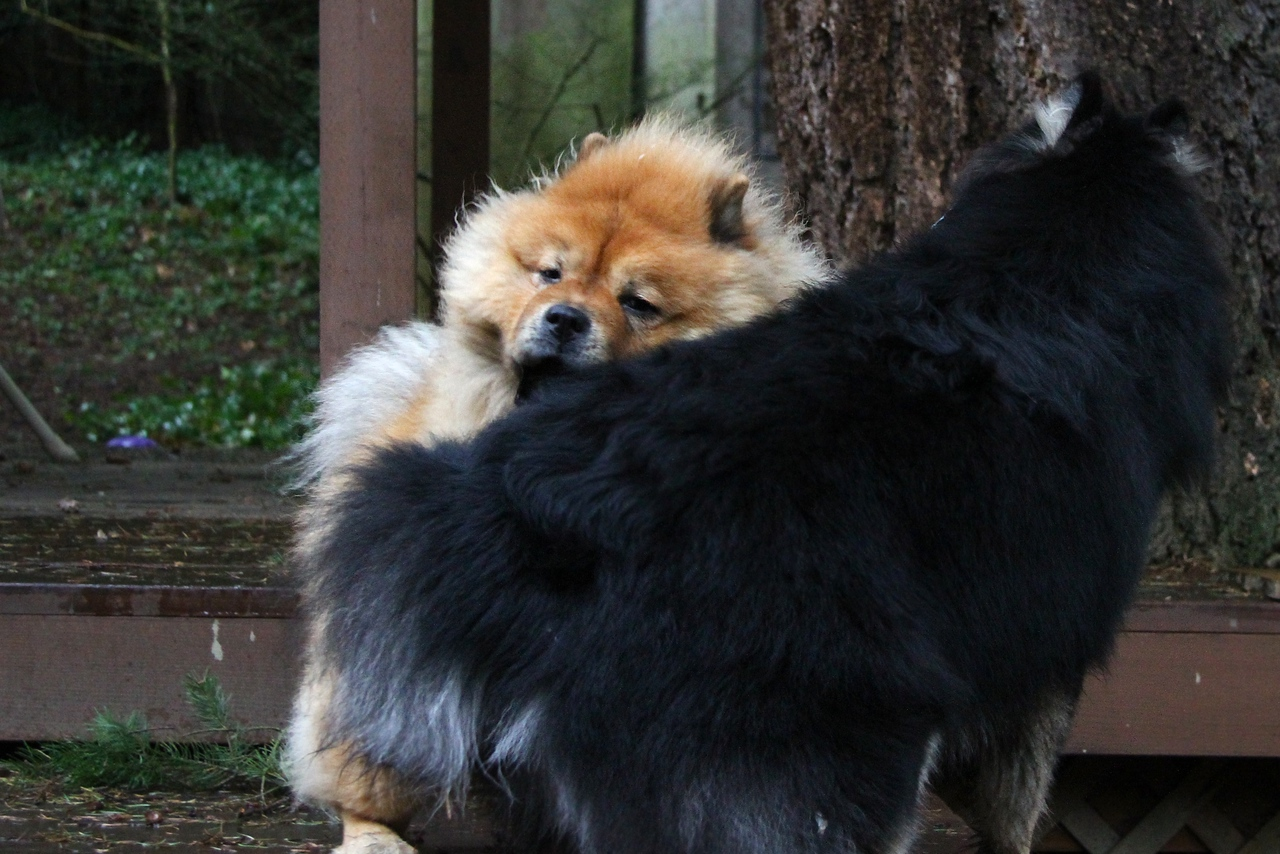 Onni and Lil enjoying a rainy day in the back yard  1/10/13
