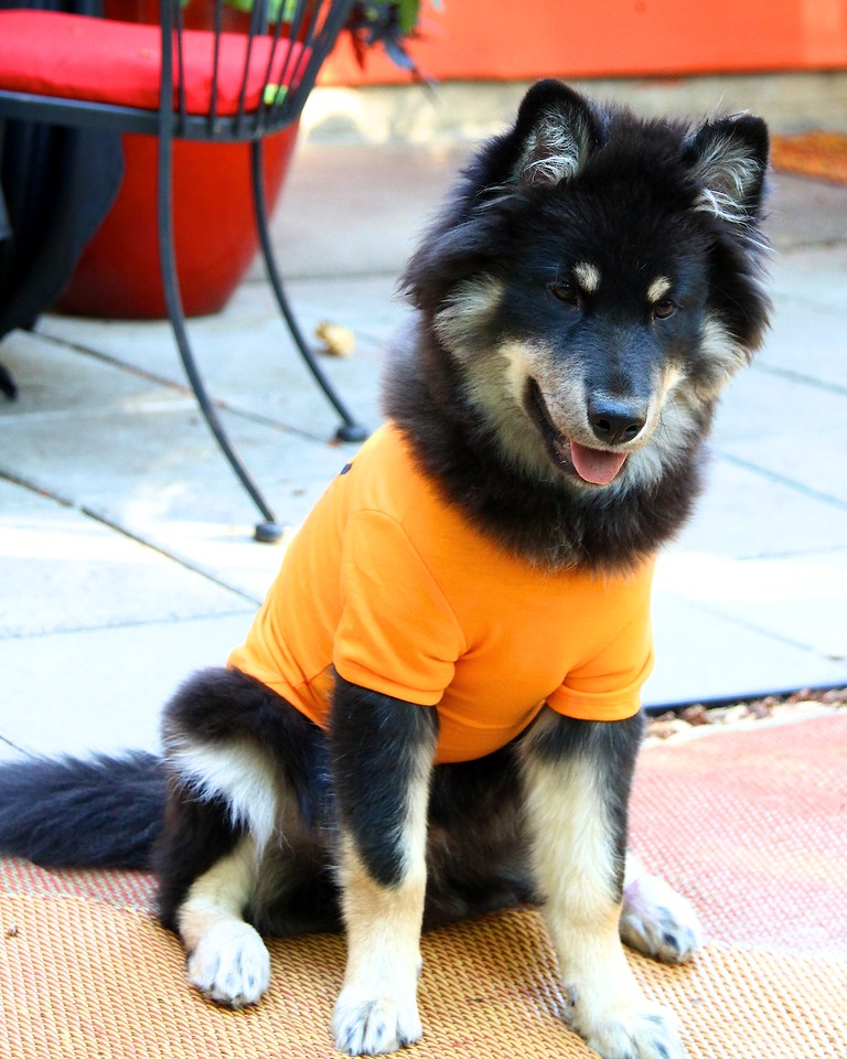 ONNI
