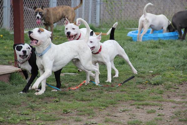 Dog Play Groups