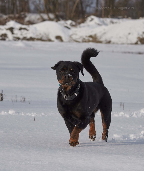 Lenox in the snow