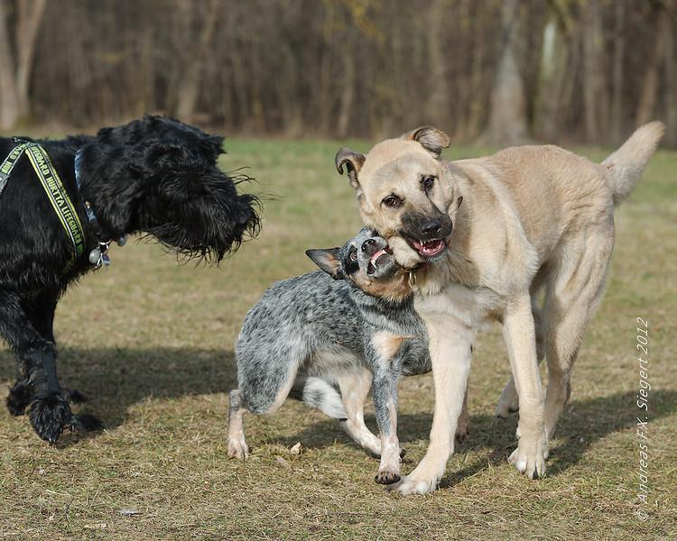 Hundespaziergang im Englischen Garten
