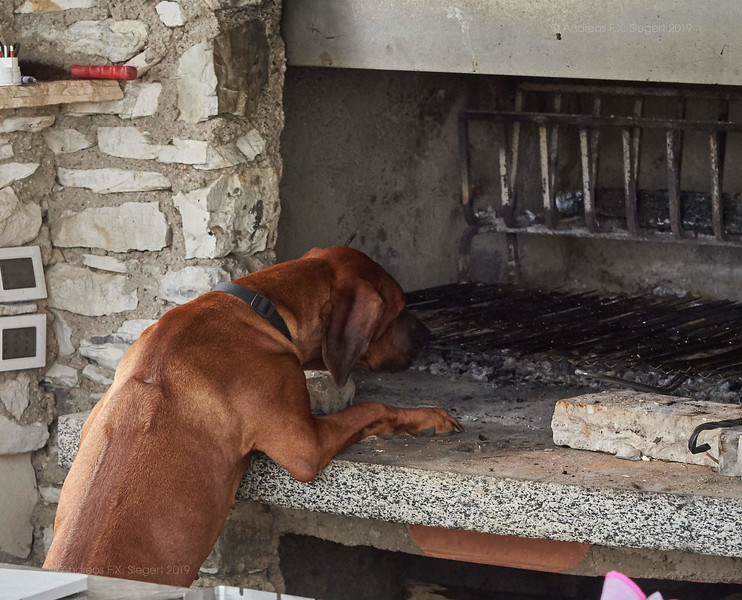 Grill inspection