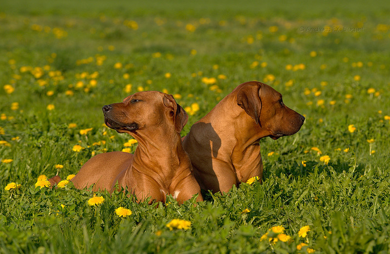 We don't talk anymore...<br /> Schluppi und Fugo