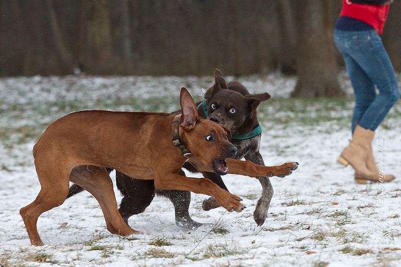 Panic puppy ;-)