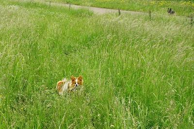 Rocco in het hoge gras