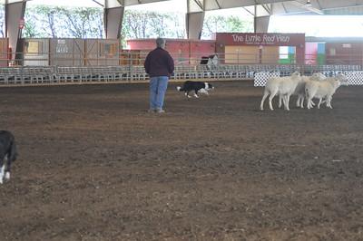 Sheep Herding Demonstration 7 March 2010