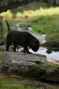 Being a big girl and exploring the brook.