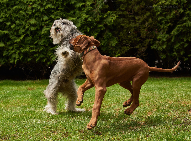 Toffee and Spike playing