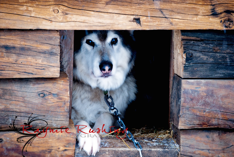 Mercury in his log dog house