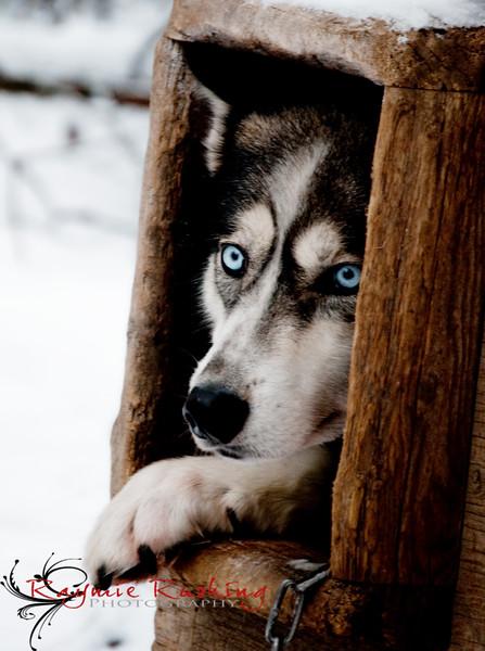 Gemini hiding in her dog house