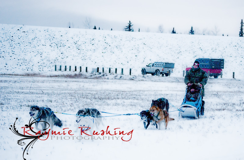 Dog team driven by James Langston with Mike Pawlak in the basket. Lead dogs Ichabod and Polar, Reba in swing, Maude and Coyote behind her and Remus (or Remi for short) pulling up the rear.