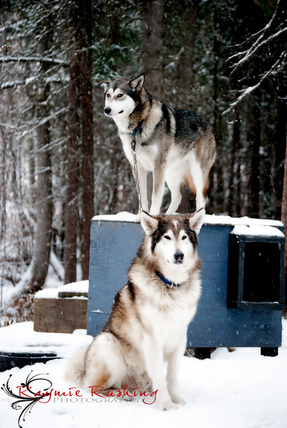 This is Calypso on her dog house while her father Griffin waits patiently on the side